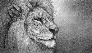 how to draw a lion portrait youtube