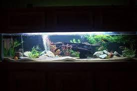 aquarium decoration ideas freshwater millerbuilds s freshwater tanks details and photos photo 28273
