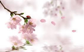 sakura romantic wallpaper by dodozhang21 on deviantart