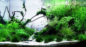 Most Beautiful Aquascapes Aquarium Fpsbutest Page 6