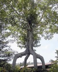 special tree easybranches jan jansen
