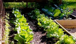 how to prepare for your fall vegetable garden