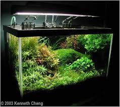 Aquascapes Com 76 Best Aquarium Aquascapes Images On Pinterest Planted Aquarium