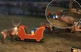 watch rudolph reindeer caught camera destroying santa u0027s