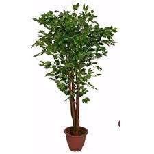 uk gardens large ficus benjamina artificial tree potted artificial