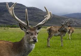 When Do Deer Shed Their Antlers by How Did Animals U0027 Dazzling Headgear Evolve