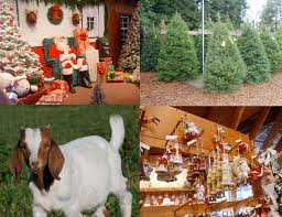 the christmas tree shops locations part 36 christmas world 2016