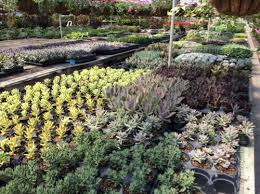 wholesale flowers near me earth greenhouse gardening plants river forest il