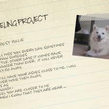 american eskimo dog calgary heeling project for dog loss pet photographer canadasarahann dog