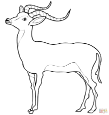 download somali animal coloring pages
