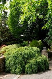 healthy lawn easy backyard design landscaping ideas nazagreen