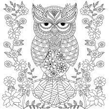owl coloring page para colorir e pintar coloring and painting