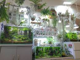 Aquascape Design Best 25 Aquarium Aquascape Ideas On Pinterest Aquarium Ideas
