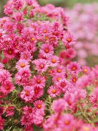 fall blooming flowers top fall flowers for your garden pink blue butterfly and bears