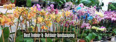 tropical plants u0026 orchids inc