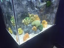 taking pictures at the ny aquarium josephine herrick project