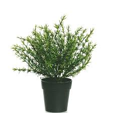 artificial potted ornamental herb plants props rosemary thyme