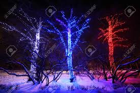three trees with many decorative blue and white lights at