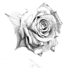 pencil drawing roses drawing flowers how to draw a rose with