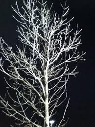 white tree search 16001
