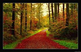 forest trees leaves path autumn forest road woods wallpaper free