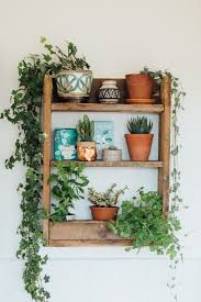 wooden shelf with potted house plants and cacti bedroom and