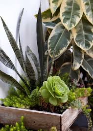 8 Houseplants That Can Survive by 8 Houseplants You Can U0027t Kill