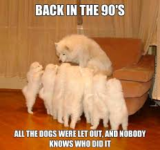 who let the dogs out very funny pics