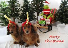 dog christmas cards dog christmas cards free s day cards 2012