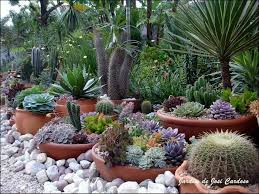Cactus Garden Ideas The Pots Make It Easy To Switch Out If They Die I Also Wouldn T