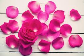 Rose Petals Free Photo Rose Petals Rose Flower Bloom Free Image On