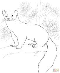 american marten coloring page free printable coloring pages