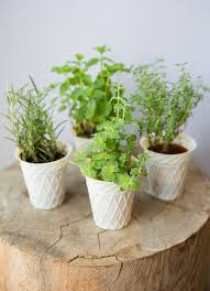 fall and winter herbs keeping flavor in your kitchen year round