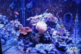 Saltwater Aquascaping Reef Tank Rockscape How To Drill And Cement Your Live Rock Gmacreef