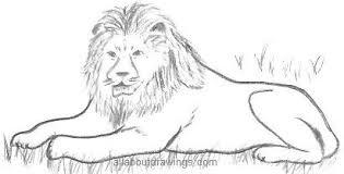 pussycat lion drawings