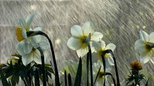 rainy weather wallpapers odd wallpapers