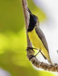 Birds In Your Backyard Top 10 Birds In Your Backyard Fascinating Facts You Need To Know