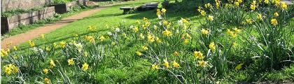 eden community garden clapham old town clapham u0027s community garden