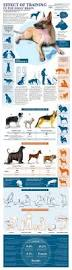 afghan hound in apartment puppy training schedule teaching your pup how to grow up