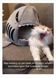 Animal In Bed Meme - 10 fresh memes 8 has some amazing stuff shark cat bed