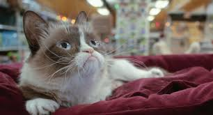 Grumpy Cat Photo 1 Best - 17 best cat prime movies you and your cat will love top reveal