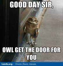 Meme Pun - 13 best owl puns images on pinterest owls animaux and funny