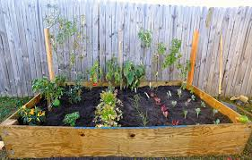 pictures to start vegetable gardening in small spaces rectangular