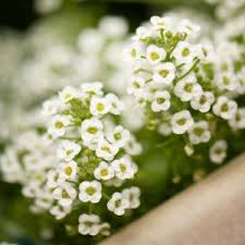 12 Best Annual Flowers For by 12 Budget Friendly Annual Flowers For Your Garden Allyou Com
