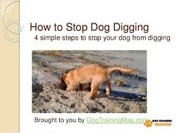 4 simple steps to stop dog digging