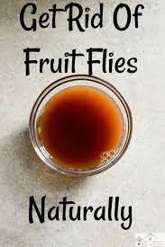 getting rid of fruit flies houseful of nicholes
