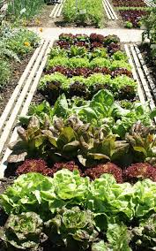 how to grow veg in the shade the telegraph