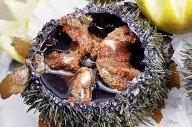 comment cuisiner des oursins les oursins ce plat méconnu fish fiches