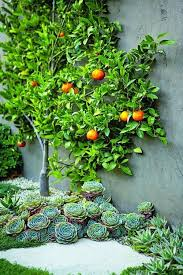 Fruit Garden Ideas Pictures Of Fruits Container Gardening Ideas 14 Inspiring Fruit