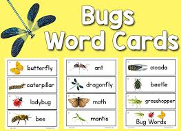 insect picture word cards prekinders